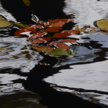 Nature as an abstract and semi abstract painter in Vienna, autumn 2014