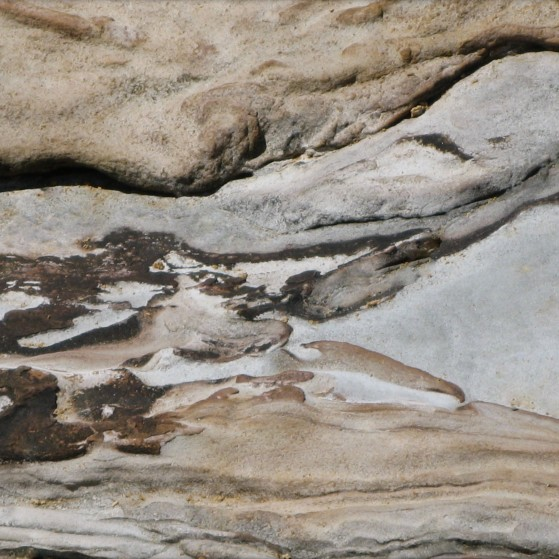 Encounter on a rock