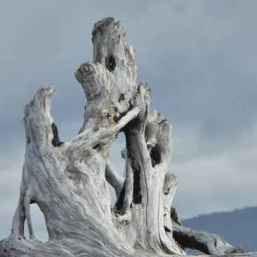 Sculptures made by trees
