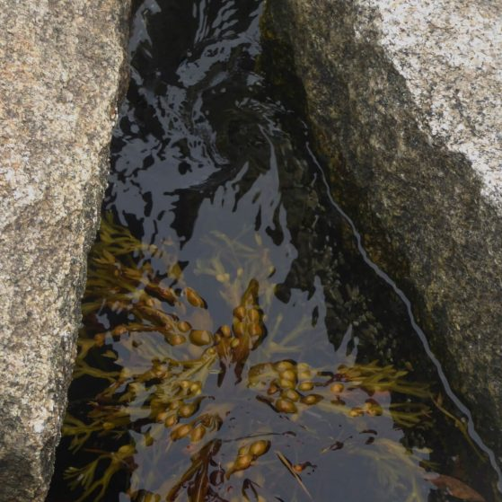 Low tide pools
